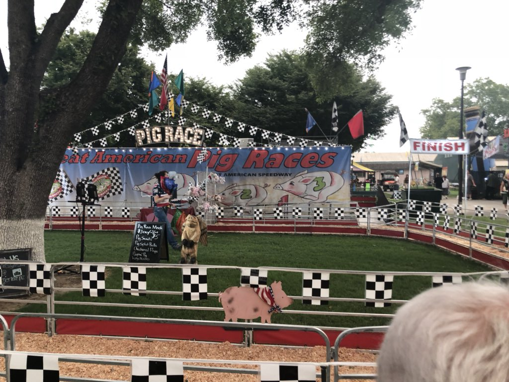 "The ""Great American Pig Races""…"